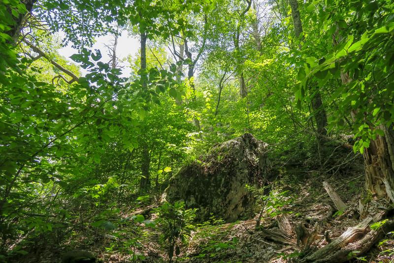 Green Mountain Trail -- 5,000'
