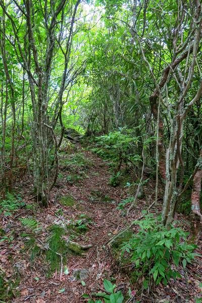 Green Mountain Trail -- 5,740'