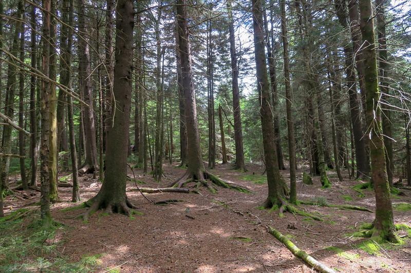 Green Mountain Trail -- 5,720'