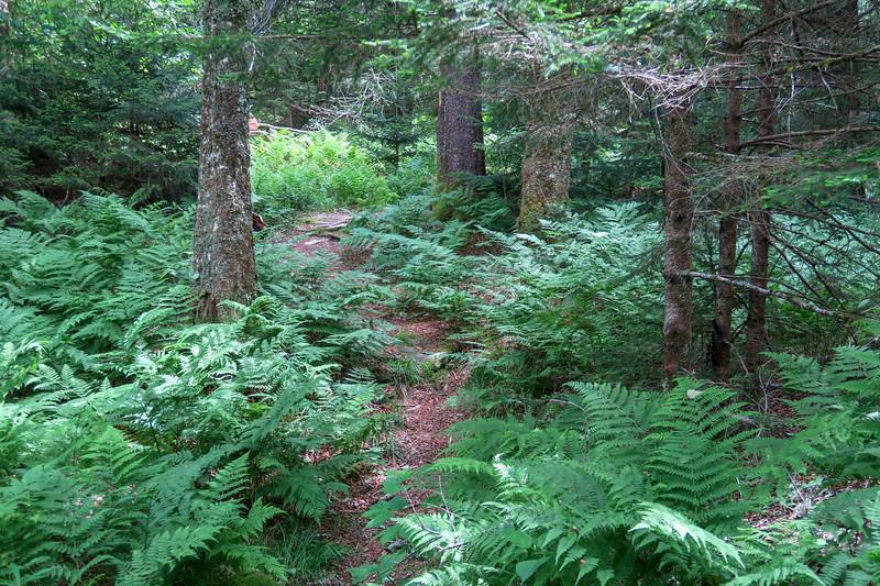 Green Mountain Trail -- 5,750'
