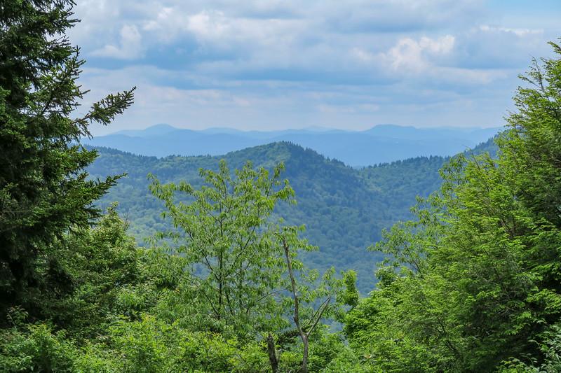 Raspberry Field View -- 5,420'