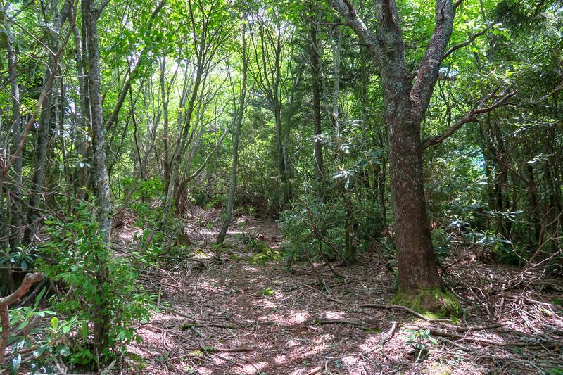 Green Mountain Trail -- 5,200'
