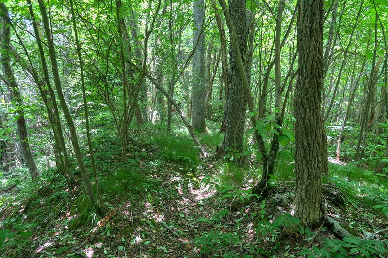 Green Mountain Trail -- 5,140'