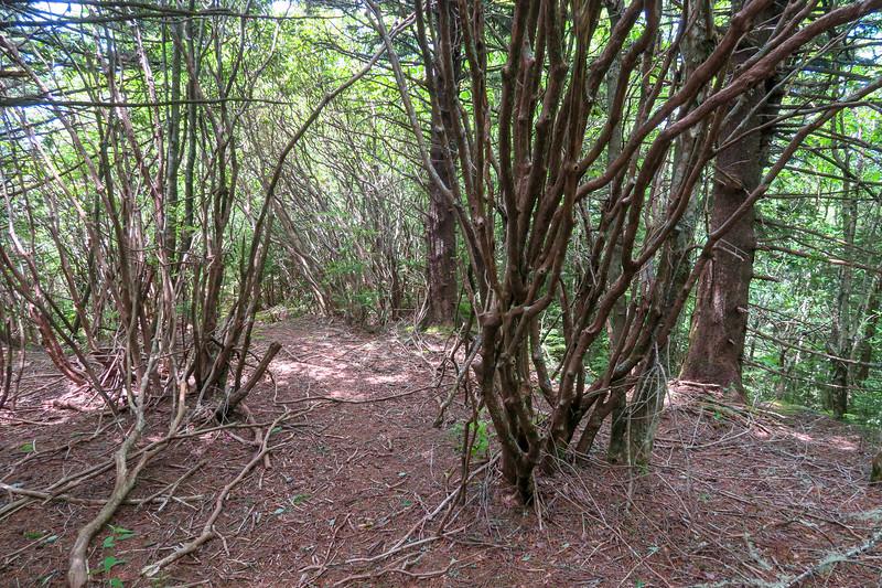 Green Mountain Trail -- 5,550'