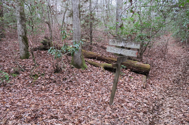 Butter Gap-Long Branch Trail Junction
