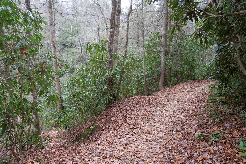 Cat Gap Loop-Upper Cedar Rock Creek Falls Spur Junction