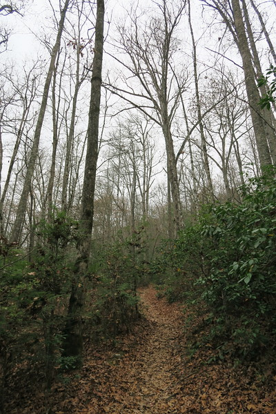 Cat Gap Loop Trail