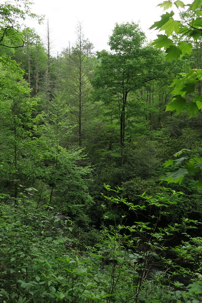 High Falls Spur Trail