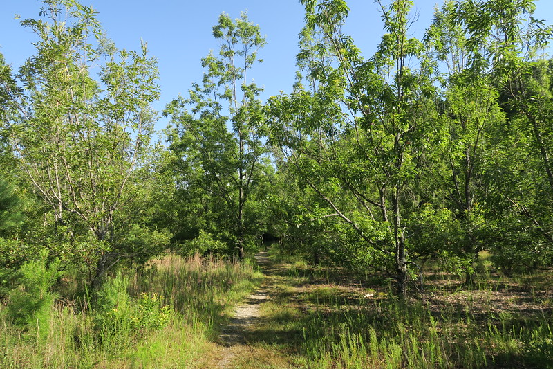 Bad Creek Spur Trail -- 1,900'