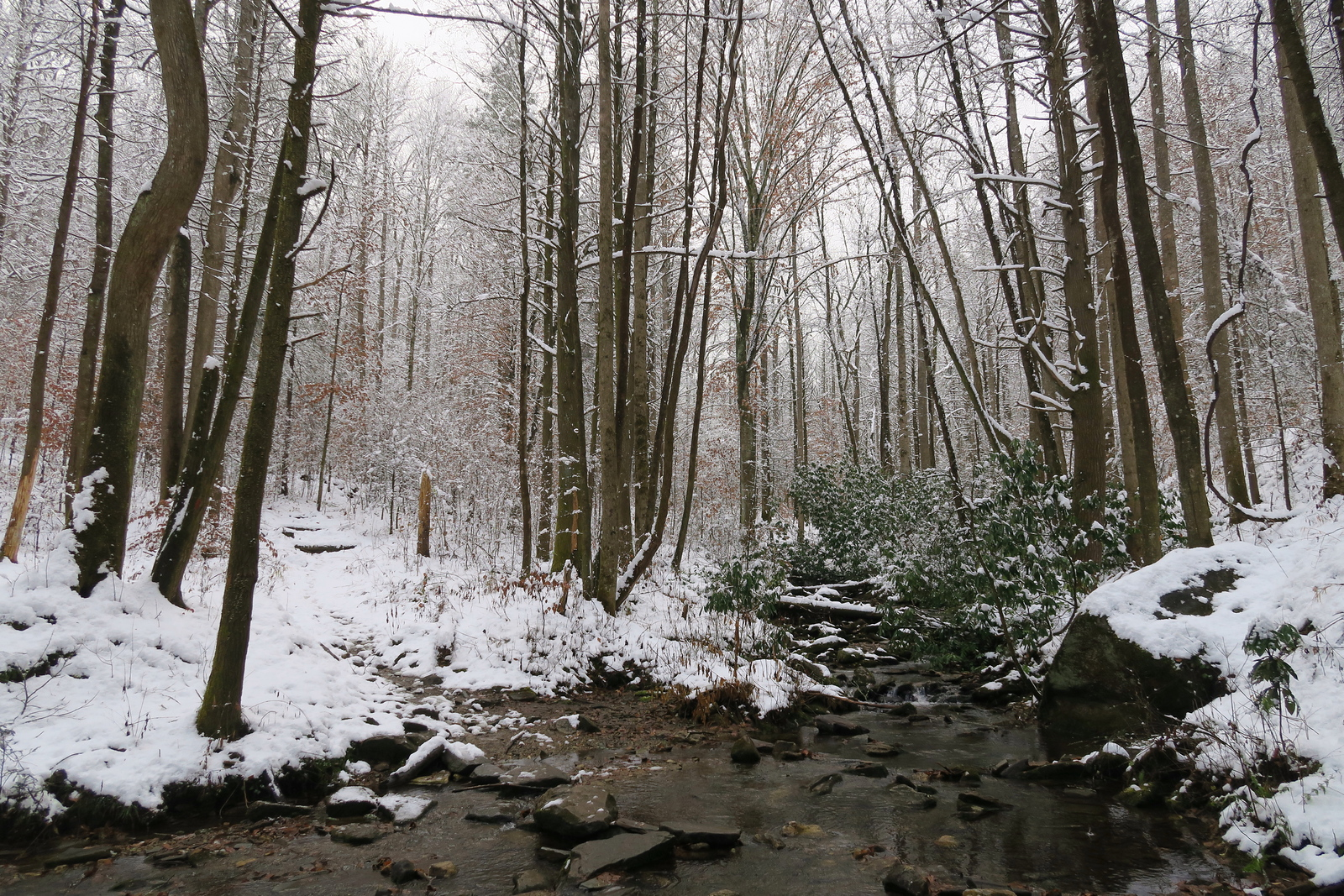 Horse Cove Creek