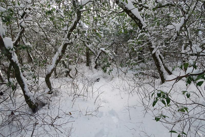 Spur Path