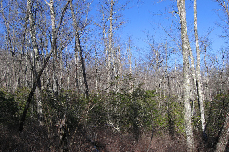 A typical forest scene along the trail atop John Rock...