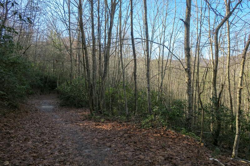 Pine Tree Loop Trail -- 2,400'