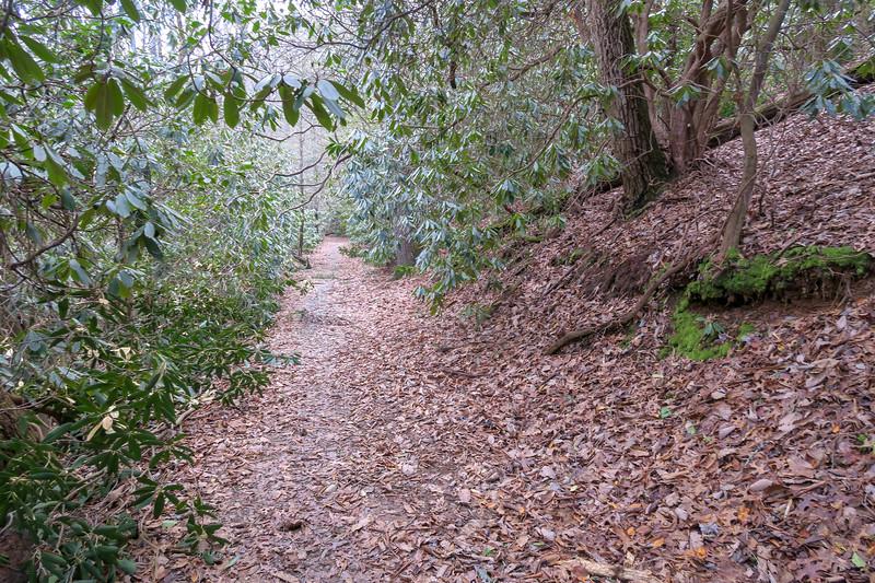 Explorer Loop Trail -- 2,300'