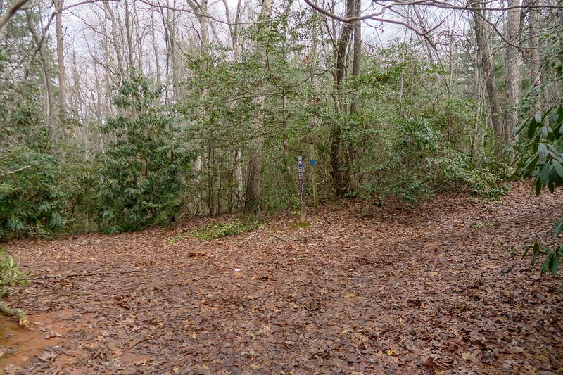 Pine Tree Loop-Pine Tree Loop/Explorer Loop Connector Trail Junction -- 2,250'