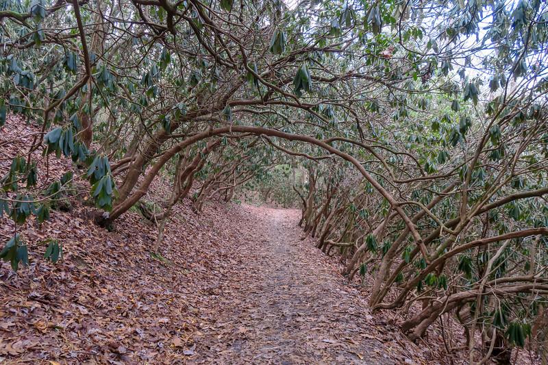 Homestead Trail -- 2,170'