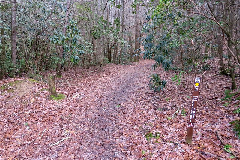 Explorer Loop Trail-Forest Road 479H Lower Junction -- 2,310'