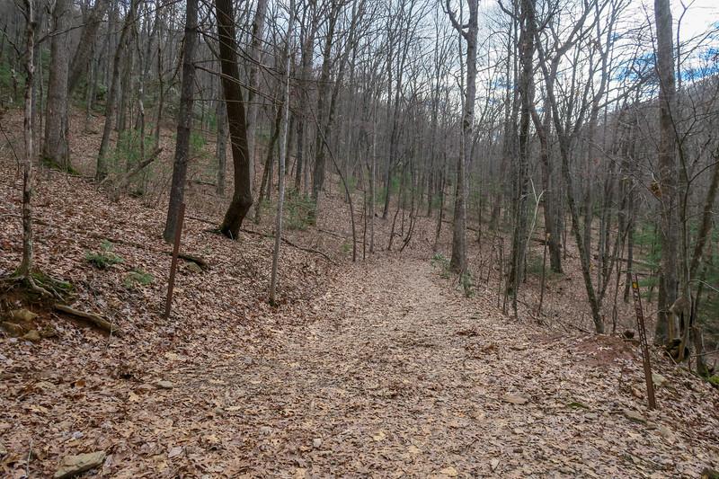 Explorer Loop-Chestnut Cove Trail Junction -- 2,580'