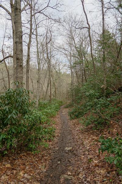 Pine Tree Loop Trail -- 2,170'