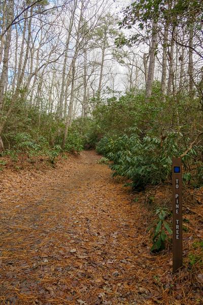 Explorer Loop-Pine Tree Loop/Explorer Loop Connector Trail Junction -- 2,230'