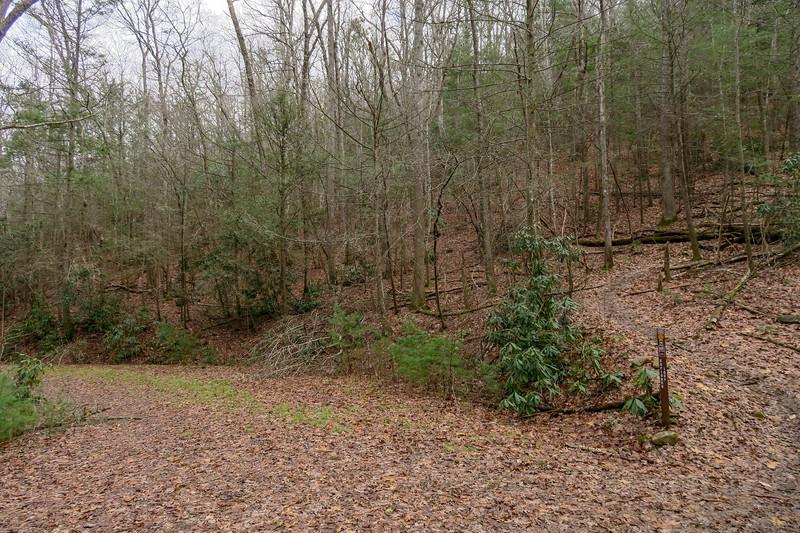 Explorer Loop Trail-Forest Road 479H Upper Junction -- 2,420'