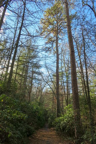 Pine Tree Loop Trail -- 2,340'