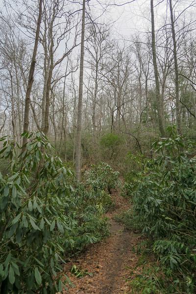 Pine Tree Loop Trail -- 2,180'
