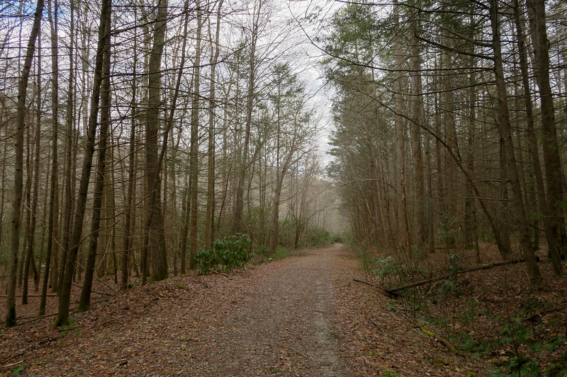 Explorer Loop Trail (F.R. 479H) -- 2,330'