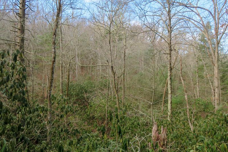 Small Creek Trail -- 2,200'