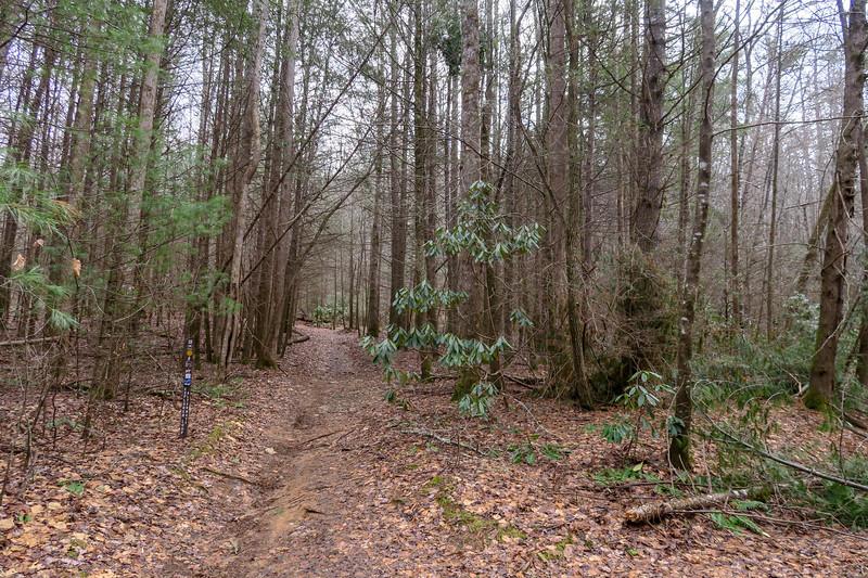 Explorer Loop Trail (F.R. 479H)-Explorer Loop Connector Junction -- 2,350'