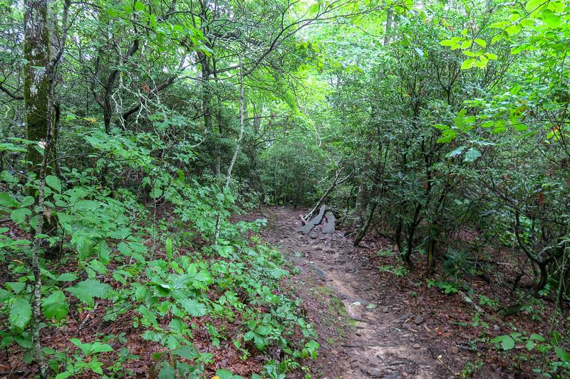 Laurel Mountain Trail -- 3,900'