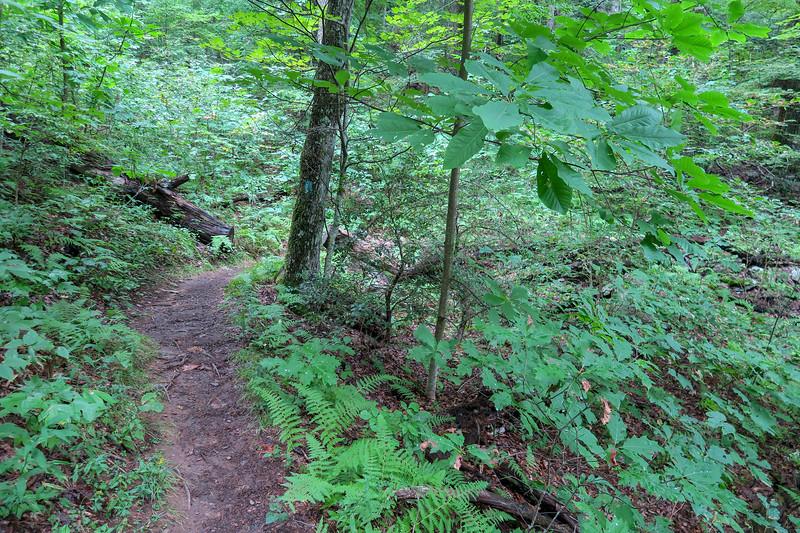 Laurel Mountain Trail -- 3,540'