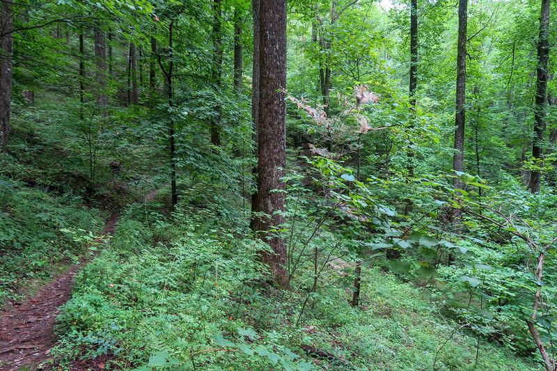 Laurel Mountain Trail -- 3,470'