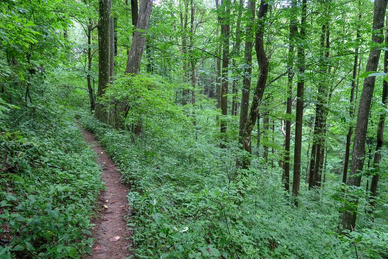 Laurel Mountain Trail -- 3,650'