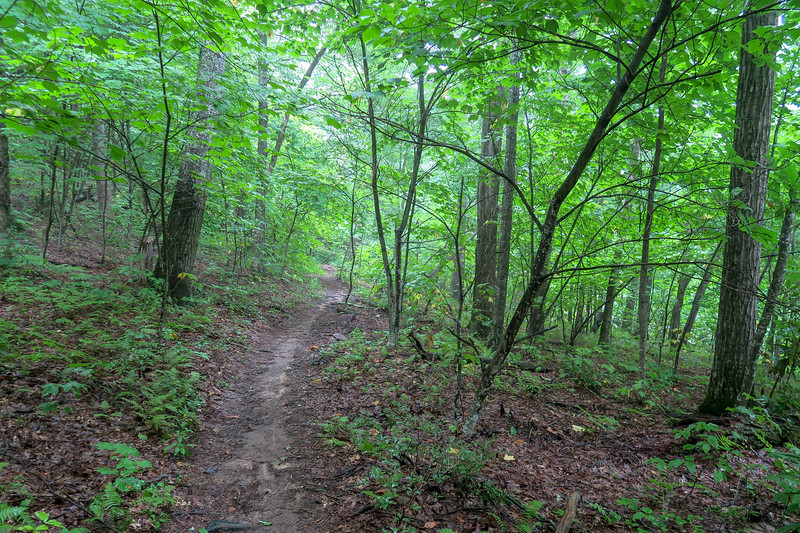 Laurel Mountain Trail -- 4,050'