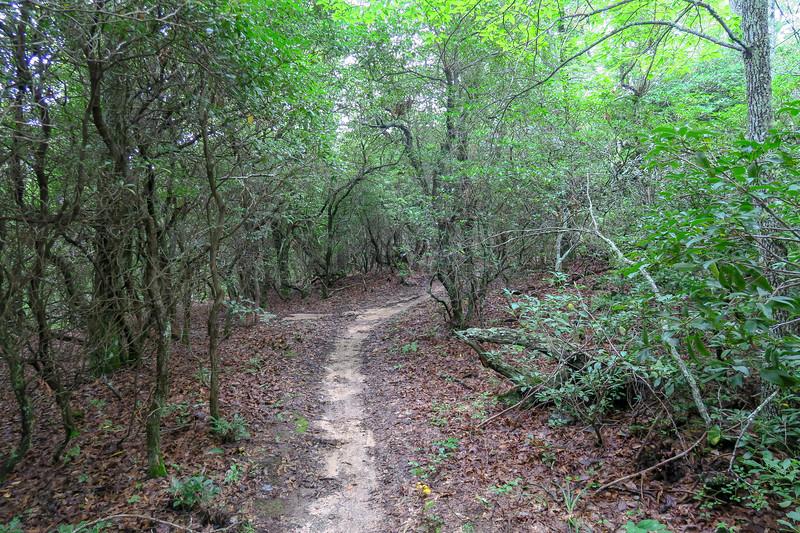 Laurel Mountain Trail -- 3,780'