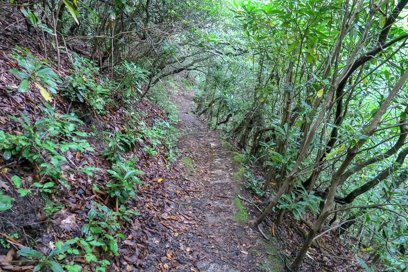 Laurel Mountain Trail -- 3,720'