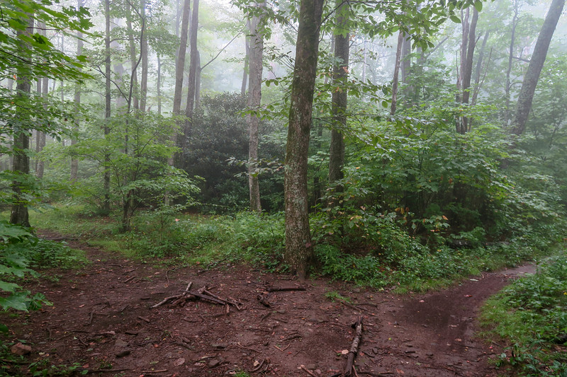 Laurel Mountain/Big Creek Connector Trail Junction (Good Enough Gap) -- 4,250'