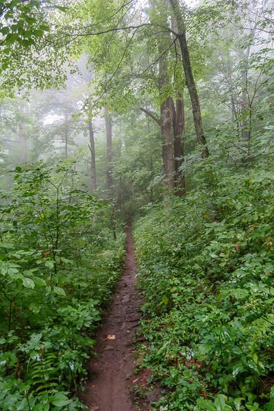 Laurel Mountain Trail -- 4,180'
