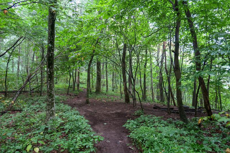Laurel Mountain Trail @ Sassafras Gap -- 4,070'