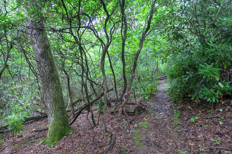 Slate Rock-Laurel Mountain Connector Path -- 3,950'