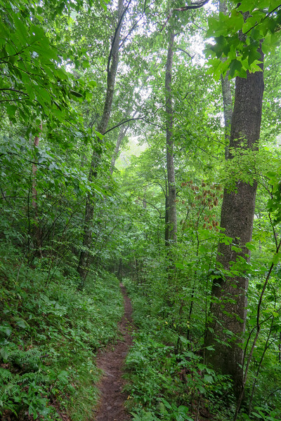 Laurel Mountain Trail -- 4,140'