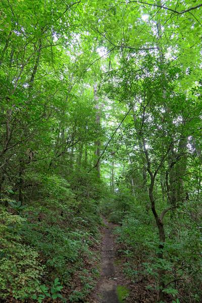 Laurel Mountain Trail -- 3,510'