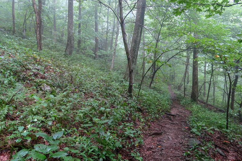 Laurel Mountain Trail -- 4,100'