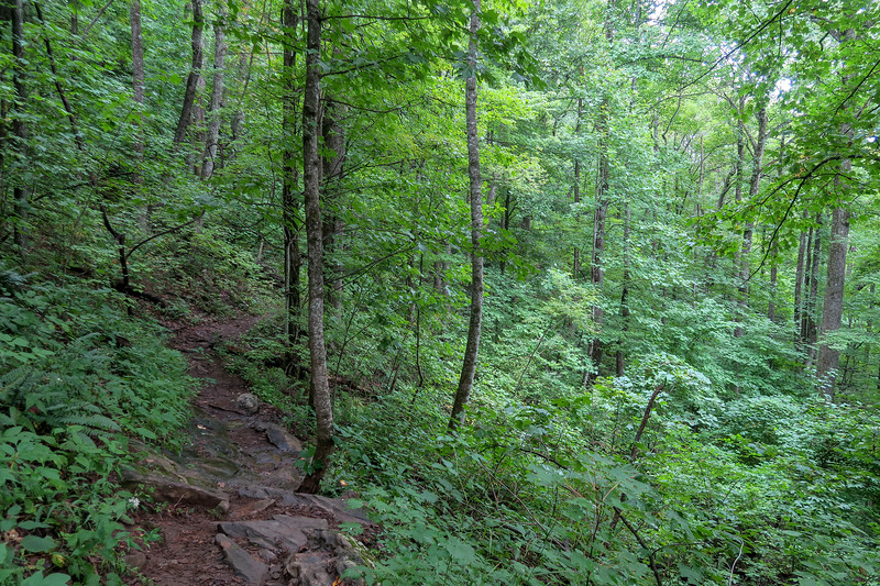 Laurel Mountain Trail -- 3,680'