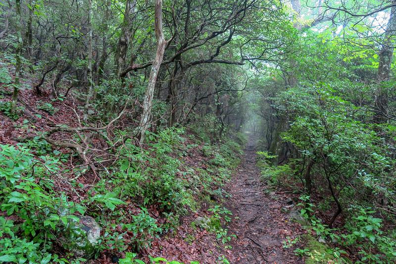 Laurel Mountain Trail -- 4,120'