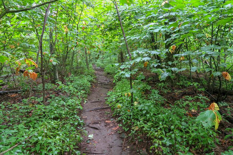 Laurel Mountain Trail -- 4,080'