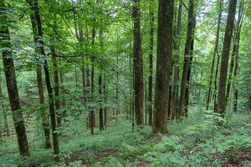 Laurel Mountain Trail -- 3,480'