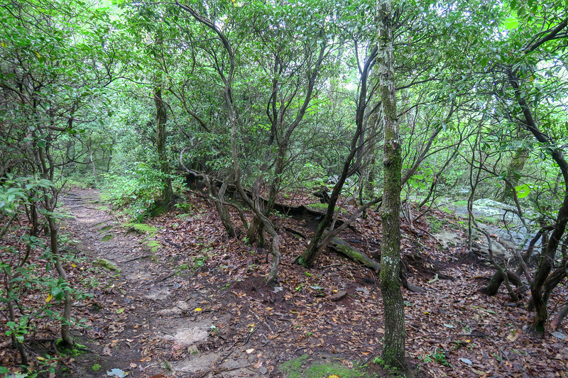 Laurel Mountain Trail -- 4,070'