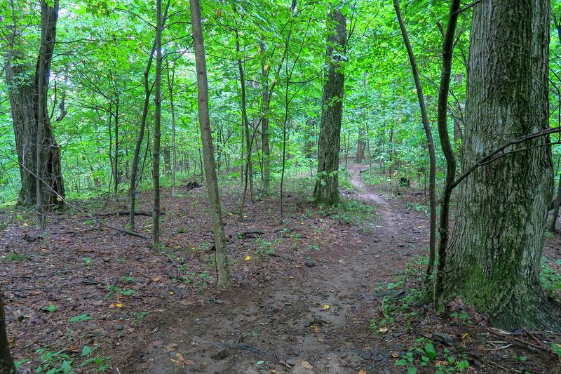 Laurel Mountain Trail -- 3,850'